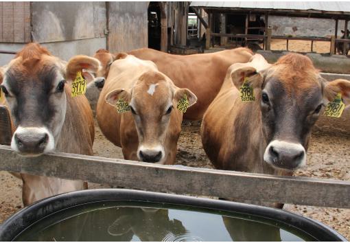 Farm Regulation Facts