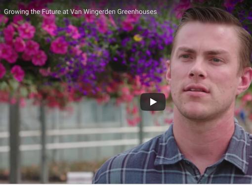 Van Wingerden greenhouse: how cow manure helps grow 50,000 hanging baskets