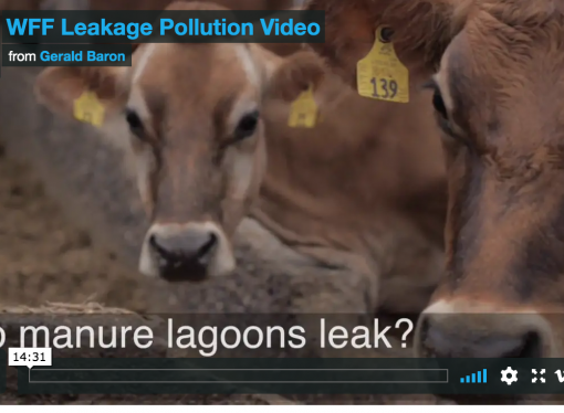 Do Manure Lagoons Leak?