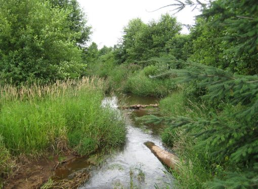 How farmer-supported buffers are protecting our waterways