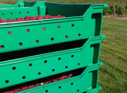 U.S. Trade Representative Asks for Full Evaluation of Raspberry Industry