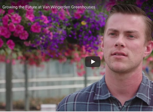 Van Wingerden greenhouse: how cow manure helps grow 50,000 hanging baskets