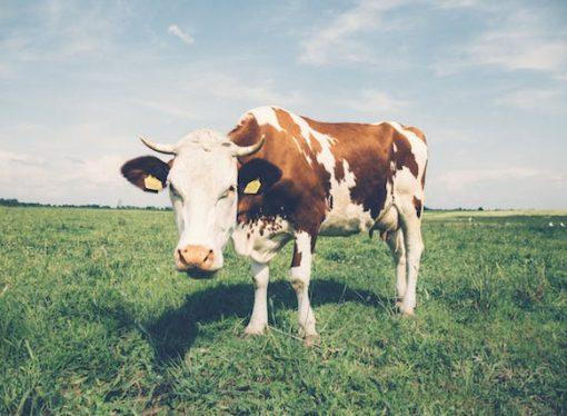 "Washington Policy Center calls Whatsupstream campaign ""all hat, no cattle."""