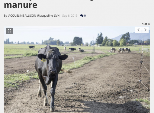 Skagit dairy farmers receive federal funding for manure management