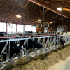 Dairy farms unable to participate in state projects needing compost