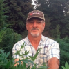 Former dairy farmer tries hand at growing hemp
