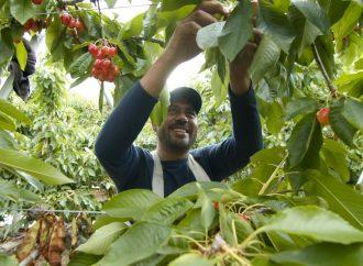 Activists Drop Farm Worker Housing Demands Before Court Hearing