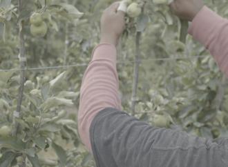 New Farm Worker Union Lawsuit Reveals Conflicting Goals of Competing Farm Worker Unions