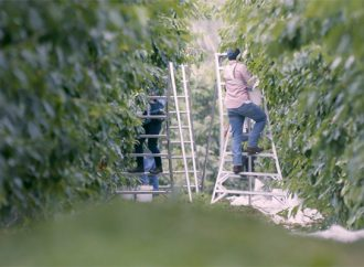 Unions Race to Blame Farms for Worker Deaths